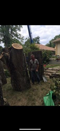 gray gil tree cutting
