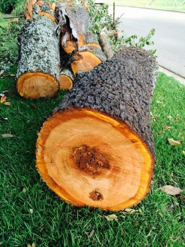 Lumber removal tree cutting birmingham