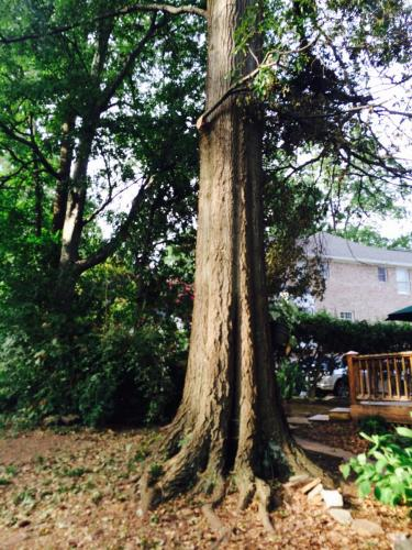 Grays roofing tree removal birmingham