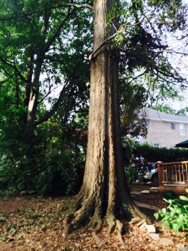 Dead tree removal birmingham al