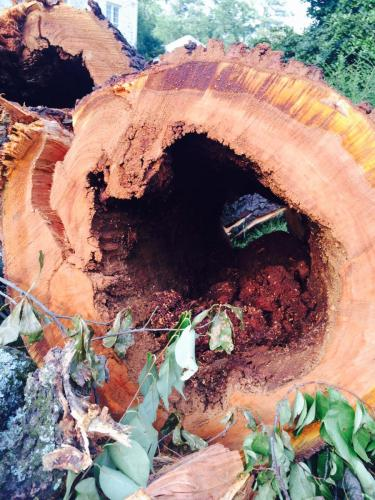 Tree removal cutting stump grinding birmingham