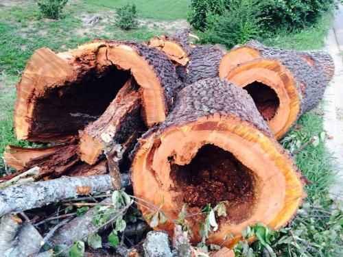 Birmingham dead tree cutting removal