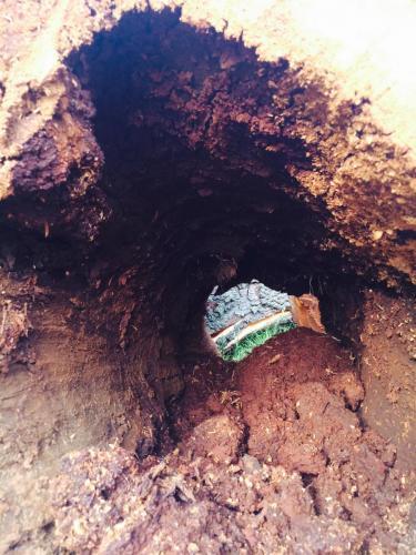Dead tree removal alabama