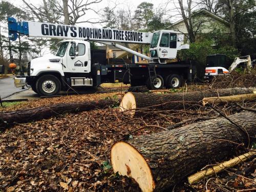 grays storm damage tree cutting