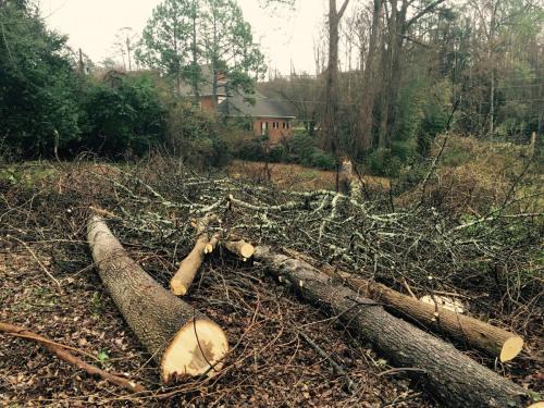 birmingham storm tree service