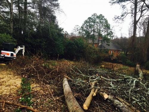 tree pruning cutting removal birmingham