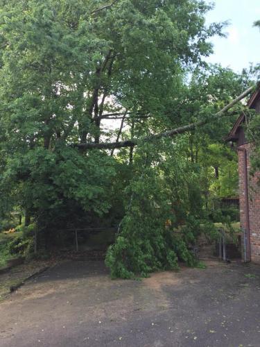 fallen-tree-3