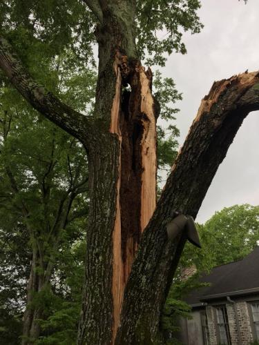 split-tree-1