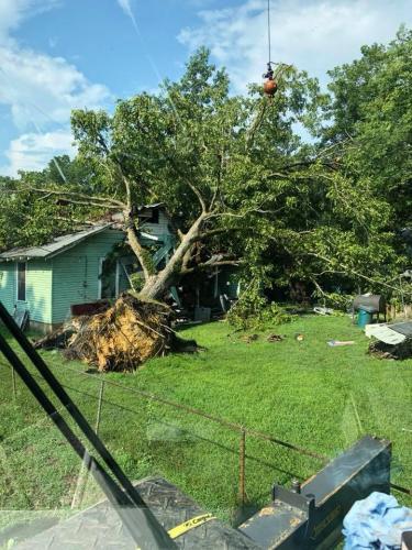 tree-in-yard-1