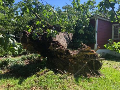 tree-in-yard-2