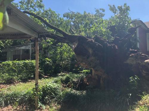 tree-on-roof-1