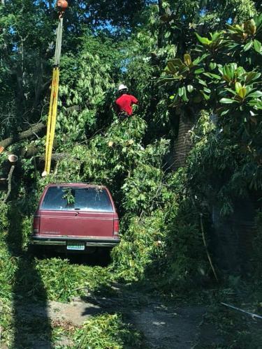 worker-in-tree-1